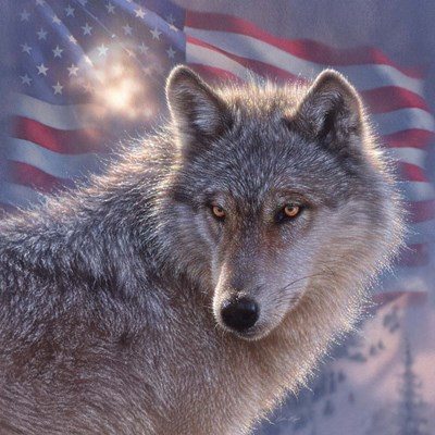 Lone Wolf America Poster by Collin Bogle for $48.75 CAD