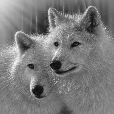 Wolves - Sunlit Soulmates - B&W Poster by Collin Bogle for $48.75 CAD