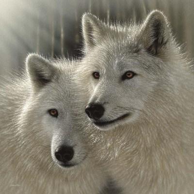 Wolves - Sunlit Soulmates Poster by Collin Bogle for $48.75 CAD