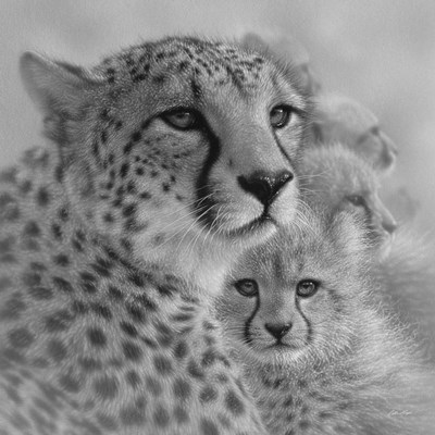 Cheetah Mother and Cubs - Mother's Love - Square - B&W Poster by Collin Bogle for $48.75 CAD