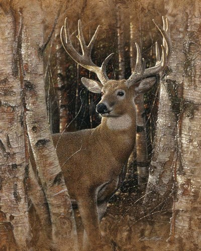 Whitetail Deer - Birchwood Buck Poster by Collin Bogle for $40.00 CAD