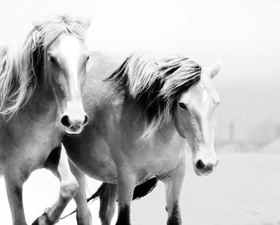 Horse II Poster by Jennifer Pugh for $48.75 CAD
