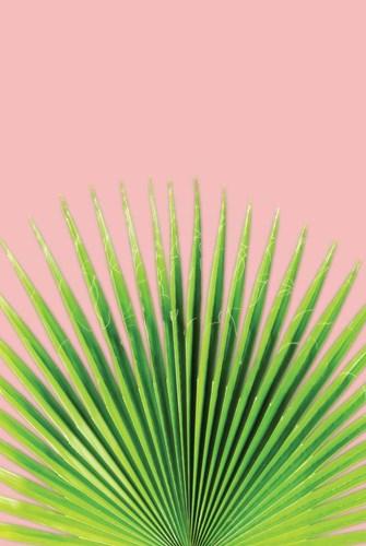 Pink Palm I Poster by Jennifer Pugh for $43.75 CAD