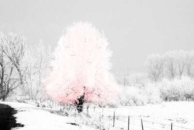 Pink Tree Poster by Jennifer Pugh for $43.75 CAD