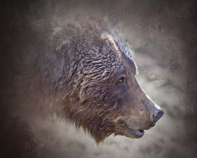 Grizzly Bear Boar Poster by Larry McFerrin for $56.25 CAD