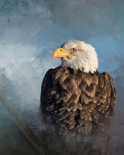 Bald Eagle Poster by Larry McFerrin for $56.25 CAD