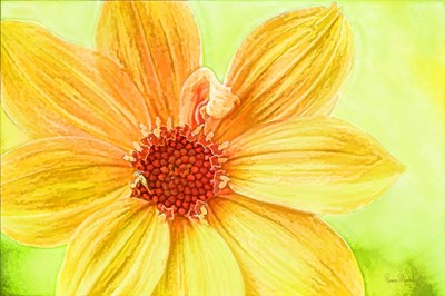 Daisy Love Poster by Ramona Murdock for $43.75 CAD