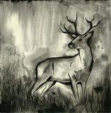 BW Deer