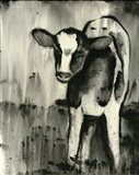 BW Cow