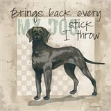 Every Stick