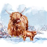 Highland Cow & Calf