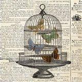 Butterflies in Birdcage
