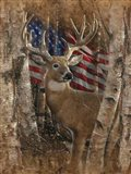 Whitetail Buck America