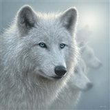 Arctic Wolves - Whiteout