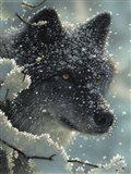 Black Wolf - Black in White