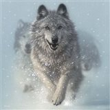 Running Wolves - Snow Plow - Square