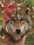 Wolf - Autumn Encounter