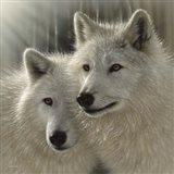 Wolves - Sunlit Soulmates