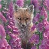 Red Fox - Foxgloves - Square