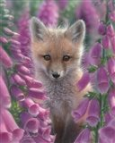 Red Fox - Foxgloves