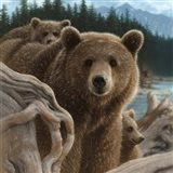 Brown Bears - Backpacking - Square
