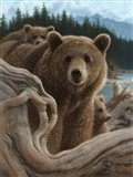 Brown Bears - Backpacking