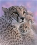 Cheetah Mother and Cubs - Mother's Love