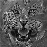 Jaguar - Ambush - B&W