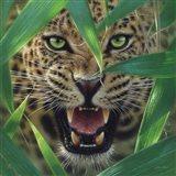 Jaguar - Ambush