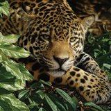 Jaguar - At Rest