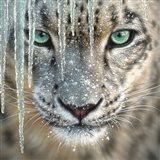 Snow Leopard - Blue Ice