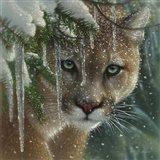 Cougar - Frozen