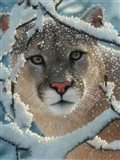 Cougar - Silent Encounter