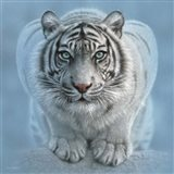 White Tiger - Wild Intentions Square