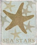 Sea Star IV