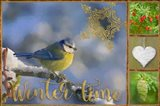 Winter Time Bluetit