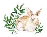 Tan Bunny Rabbit