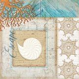 Coastal Nautilus Shell