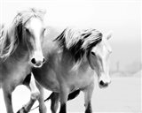 Horse II