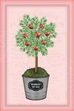 Apple Topiary - Pink