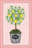 Lemon Topiary - Pink