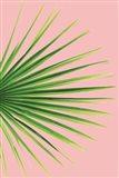Pink Palm III
