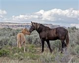 Copper Pennys Foal & Juniper