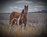 Sequoyah Colt