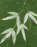 Green Spa Bamboo I