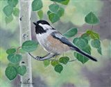 Chickadee in Aspen Tree