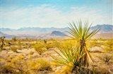 Utah Desert Yucca