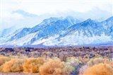 High Desert Vista II