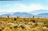 Utah Desert II