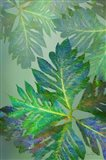 Tropical Leaves III